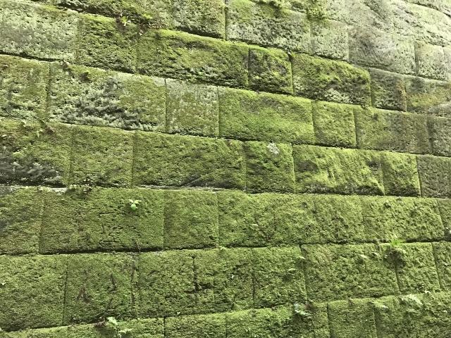 苔が生えた外壁